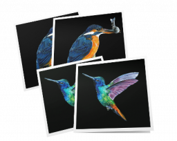 Pack of 4 cards – birds