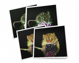 Pack of 4 cards – mice