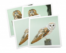 Pack of 4 cards – owls