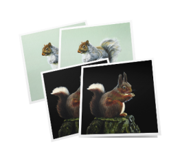 Pack of 4 cards – squirrels