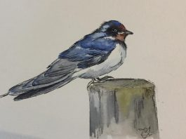 Workshop – Tuesday 7th September 2021 – Watercolours for beginners